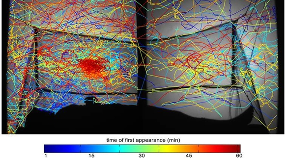 This image was captured by an infra-red tracking system and shows the flight paths of multiple mosquitoes as they attempt to reach a sleeping human protected inside an insecticide-treated be net.  The image shows the high concentration of activity on the roof of the net, above the torso of the sleeper beneath.
